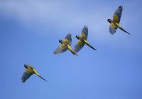 Burrowing Parrots Bahia Blanca _20181010_4109.jpg